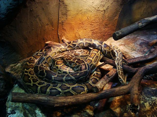 Dwa węże, a jakby jeden!