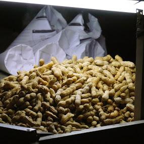 Kacang Rebus by Hsn Doel - Food & Drink Eating