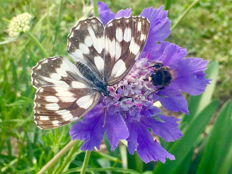 Farfalla  di  Antonella Giuliani