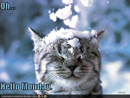 photo of a cat having snow dropped on his head: oh, hello Monday