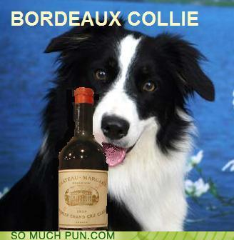 photo of a dog and a bottle of wine...Bordeaux collie