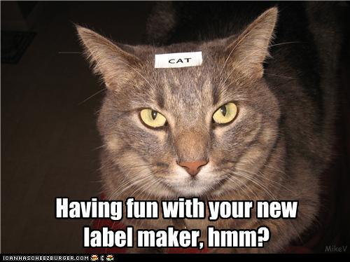 photo of a stern looking cat with a label on its head