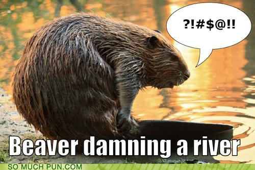 photo of a beaver cursing at the lake