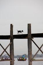 Photo: Year 2 Day 55 - Dog on U Bein's Bridge