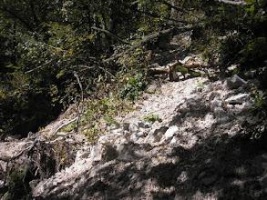 Photo: Kopací práce u štoly Barbora s ošklivě podkopanými stromy.