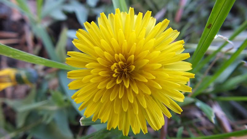 Un fiore esplosivo.... di biloscurio