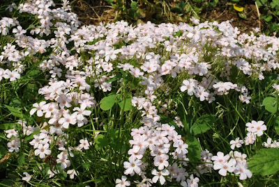 加治丘陵のお花