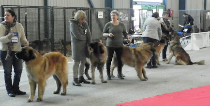 Photo: Fayona, Feelgood, Galiane, Gallia, Géniale