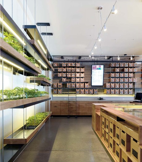 The Californian Shop of Medicinal Marijuana