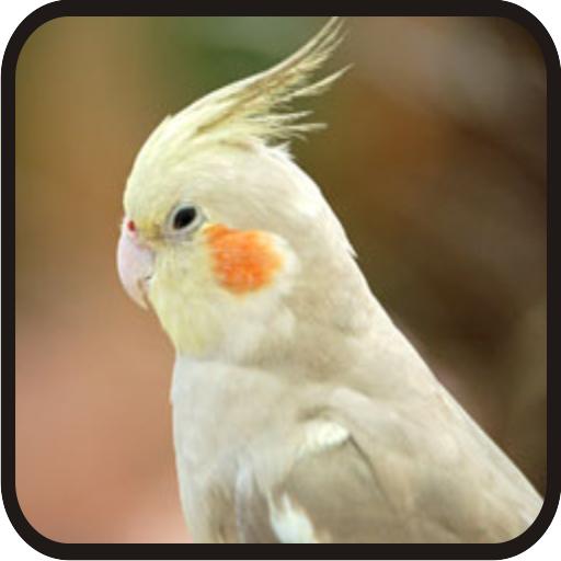Kicau Burung Falk Gacor Parkit Australia 1 0 Apk Download Com