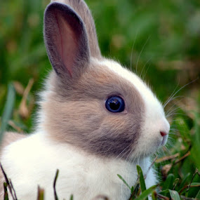 Easter Bunny  by Milton Moreno - Animals Other Mammals ( easter, bunny, bunnies, easter bunny,  )