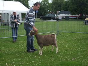 "Photo: Klasse 1: 1 jarige toggenburger geiten.  1a. Sarie's Gezina ""JH"""