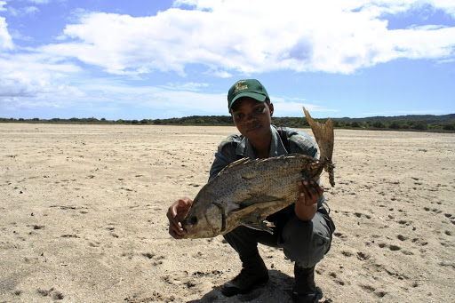 Bone of contention: Ezemvelo environmental monitor Thembelihle Mkhwanazi with one of the thousands of dead fish  that littered the floor of Lake St Lucia early last in 2016. Picture: TONY CARNIE