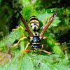 European Paper Wasp; Avispa Cartonera