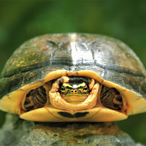 Morning.... by Muhammad Buchari - Animals Reptiles