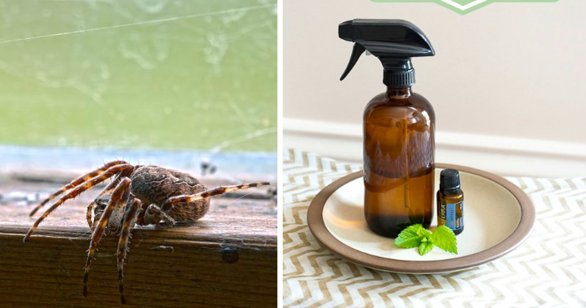 Naturally Repel Spiders With This Natural Home Remedy
