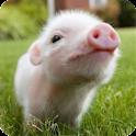 Farm Animals Sound icon