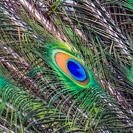 by Stanley P. - Nature Up Close Other Natural Objects (  )