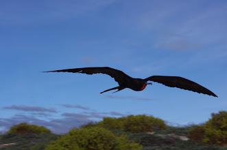 Photo: Frigate in flight