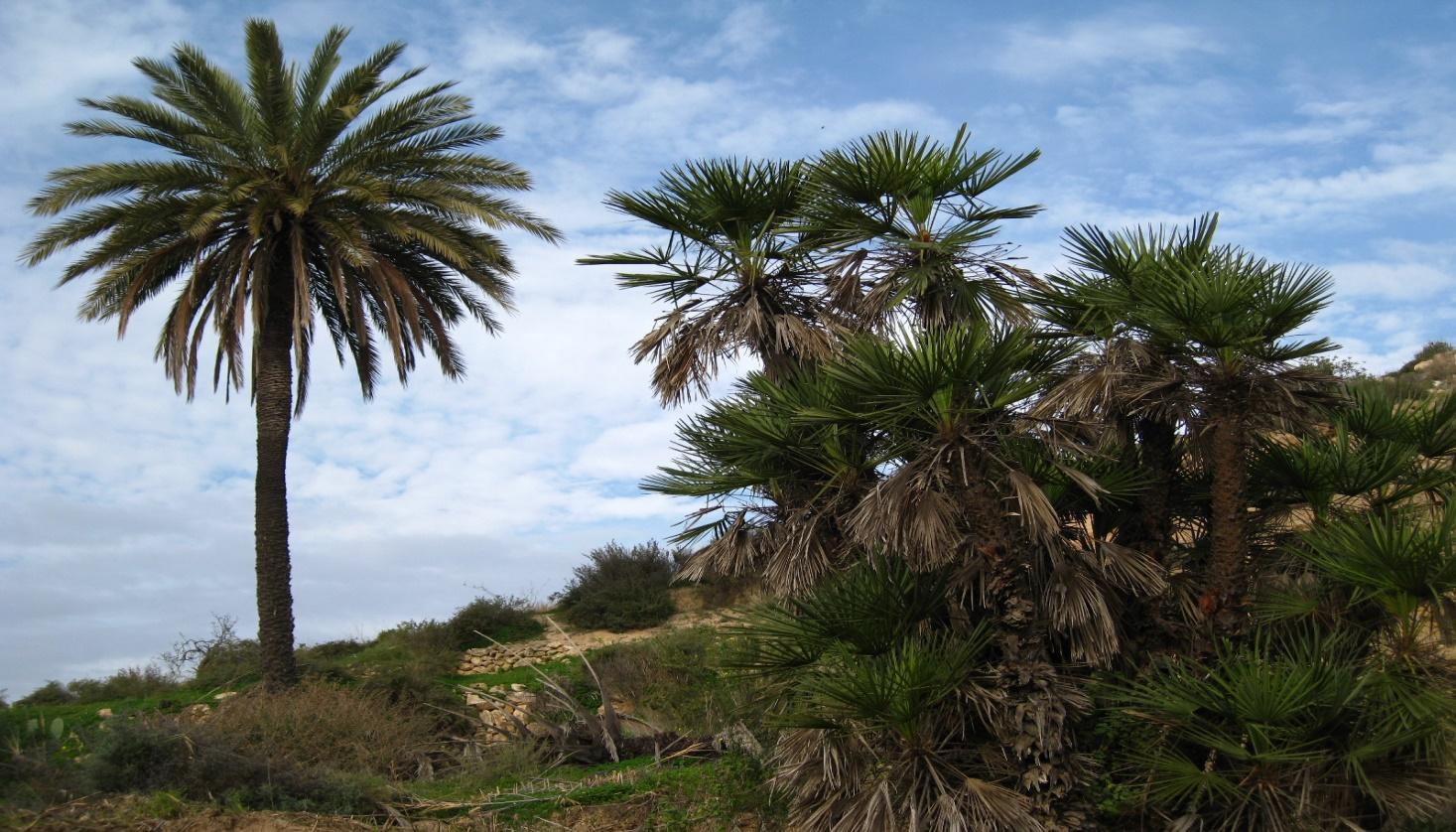 I:\NO\SENDA\2 - Sendero del Agua (Galifa)\FOTOS\Nueva carpeta\image005.jpg