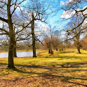 Trees and pond in park by Yvonne Katcher - City,  Street & Park  Vistas ( blue, green, trees, shadows, branches )
