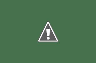 Photo: First calf 2011
