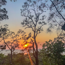 sunrise through the trees by Taz Graham - Novices Only Landscapes ( trees, sunrise, landscape )