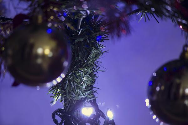 Riflessi natalizi di gatta66