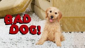 Bad Dog! thumbnail