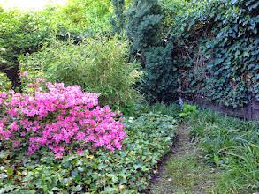 Photo: Naturgarten Düsseldorf Lohausen, Azalee