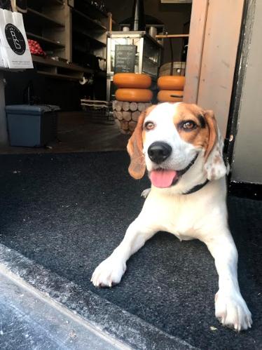 New Vegas hond