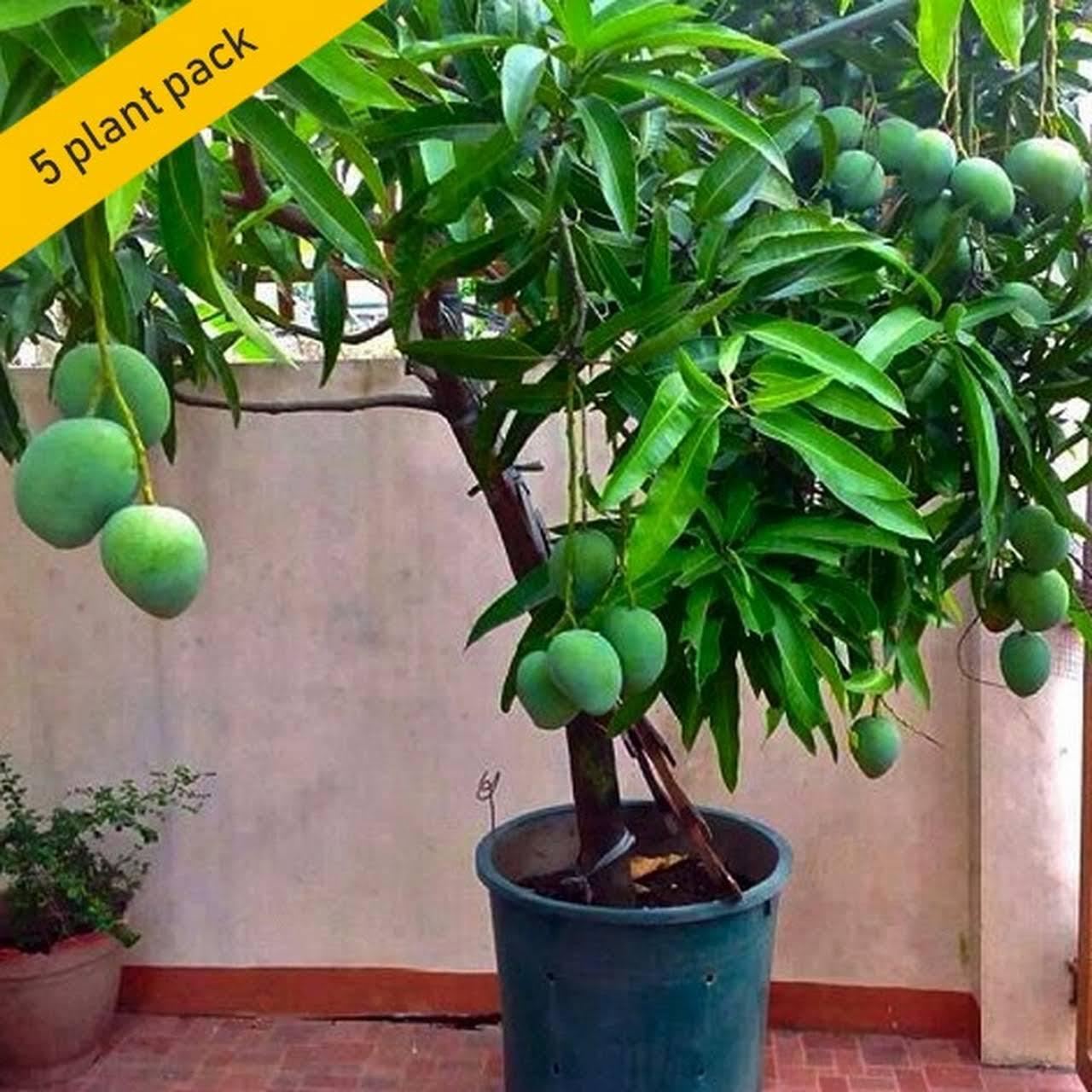 Aiswarya Gardens Mannuthy Thrissur - Nurserys in thrissur | Plant