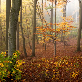 by Miroslava Winklerová - Nature Up Close Trees & Bushes