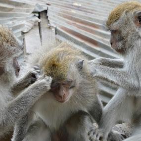 Balinese Massage by Karyn Leong - Animals Other Mammals (  )