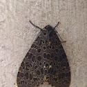 Olepa- Moth