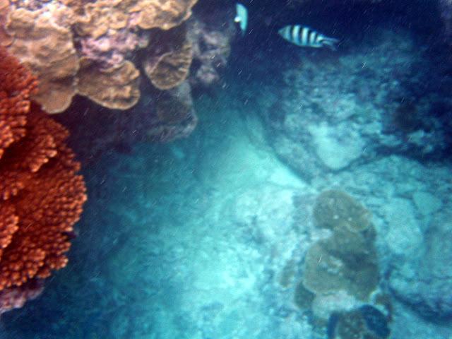 さんご礁と深み・レディエリオット島の写真