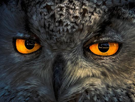 Occhi di gufo di gnuc