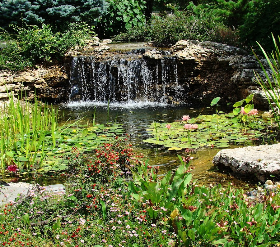 Water Garden With Falls by Yvonne Collins - Flowers Flower Gardens ( butterfly, flower garden, berrier, flowers, water garden, photography )
