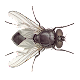Fly (game)