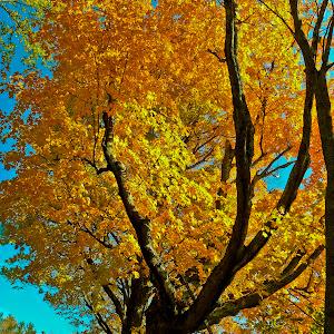 Climb to Fall.jpg