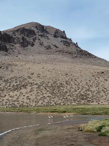 Flamands dans la laguna Chiar Kota
