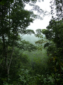 Jungle dans la brume