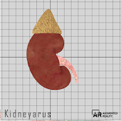 Kidneyarus
