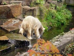 Photo: Ups, die Nuss ist im Wasser gelandet ;-)