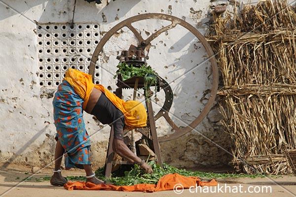 Women of Rajasthan