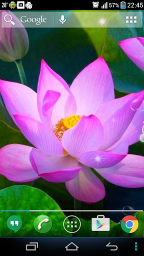 Pink Lotus Live Wallpaper