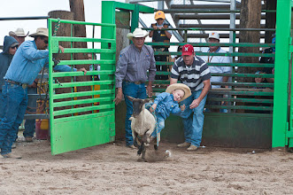 Photo: Mutton busting gets started