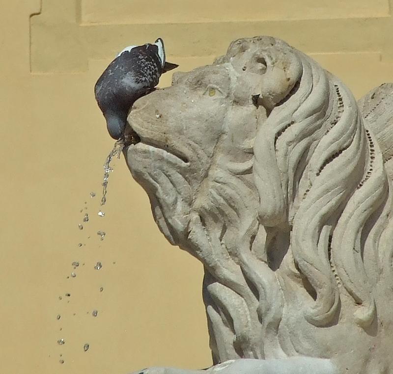 Leone ascendente fontana di Jorjo