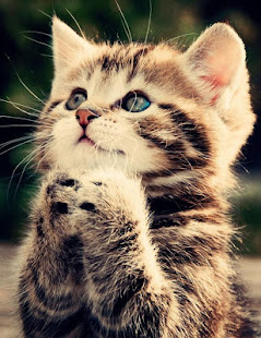 Cute kitten wallpaper apps on google play screenshot image thecheapjerseys Gallery