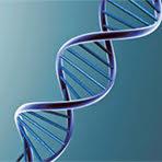 Calibrated Human Genomic DNA (Secondary Standard)